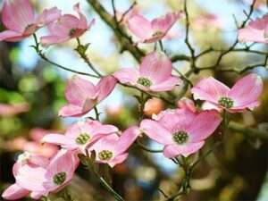 ron-york-flower-bush